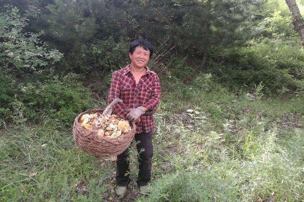 赤峰市敖汉旗贝子府镇 又到野菇飘香时图片